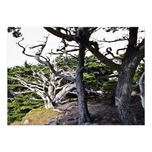 Monterey Cypresses - Pt. Lobos State Preserve Custom Announcements