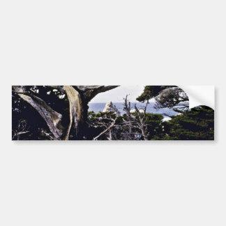 Monterey Cypresses - Pt. Lobos State Reserve Bumper Stickers
