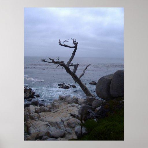 monterey dead tree print