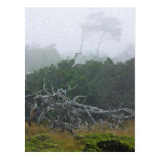 Monterey Fog Big Sur California Post Card