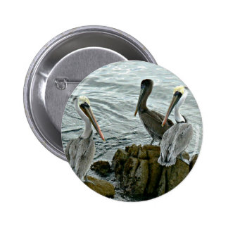 Monterey Pelicans Pinback Buttons
