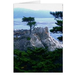 montery tree greeting card