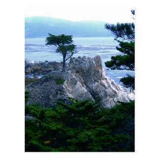 montery tree postcard