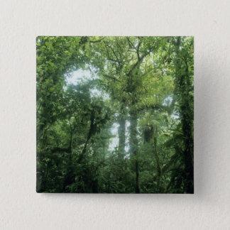 Monteverde Cloud Forest, Costa Rica. Button
