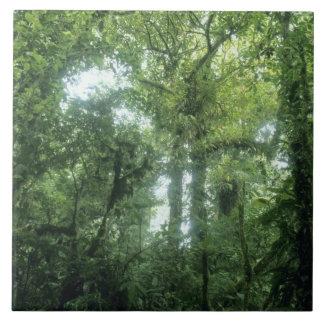 Monteverde Cloud Forest, Costa Rica. Tile