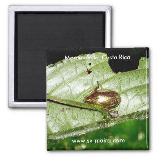Monteverde, Costa Rica Imán Cuadrado
