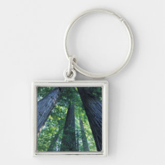 Montgomery Woods State Reserve, California. Keychains