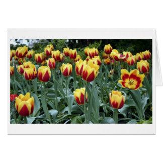 Monticello Tulips Card