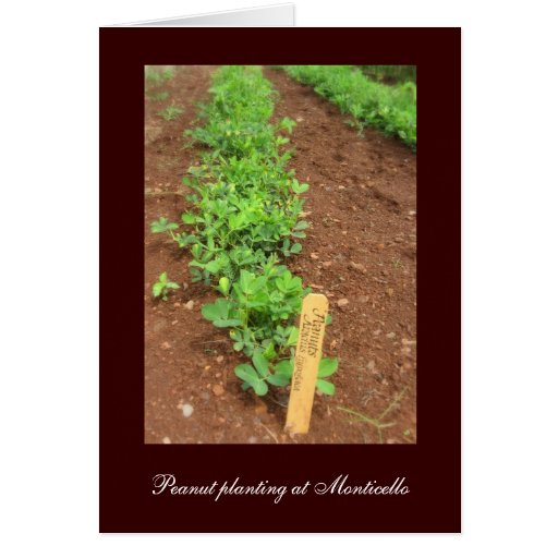 Monticello's Vegetable Gardens Greeting Card