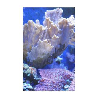 Montipora y corales de seta - el filón Collectio Impresión En Lona Estirada