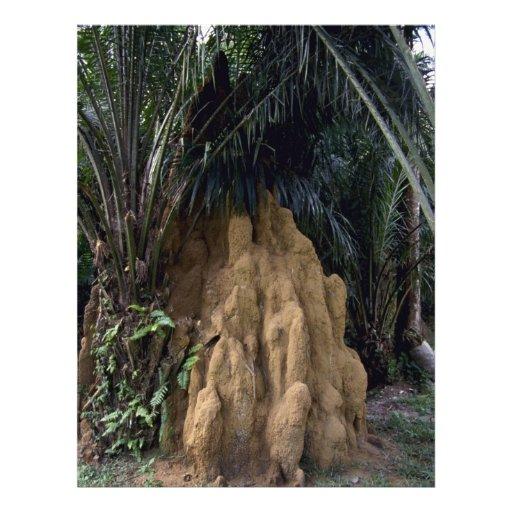 Montón gigante de la termita del bosque tarjetón