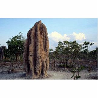 Montón gigante de la termita, Territorio del Fotoescultura Vertical