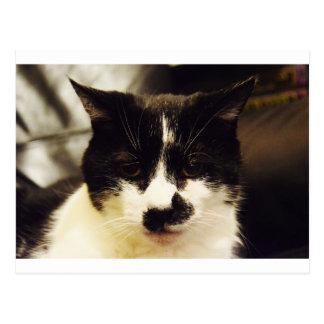 Monty Black and White cat Postcard