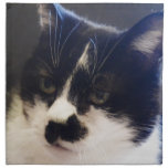 Monty Cat Cloth Napkins