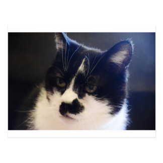 Monty Cat Postcard