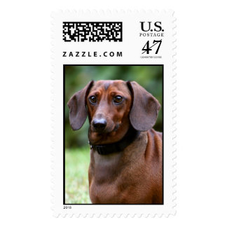 Monty the Dog Postage Stamp