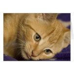 Monty the kitten card