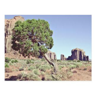 Monument Valley Tree Postcard
