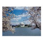Monumento de Thomas Jefferson con las flores de ce Tarjeta Postal