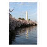 Monumento de Washington de la flor de cerezo Postal