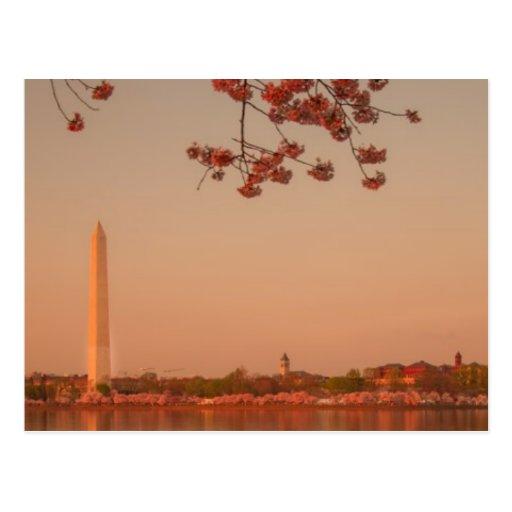 Monumento de Washington Sakura en la puesta del so Tarjetas Postales