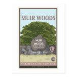 Monumento nacional 2 de maderas de Muir Tarjeta Postal