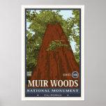 Monumento nacional 3 de maderas de Muir Impresiones