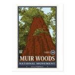 Monumento nacional 3 de maderas de Muir Tarjetas Postales