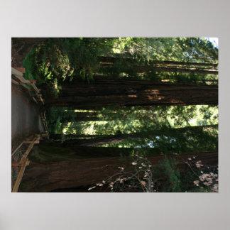 Monumento nacional de maderas de Muir Impresiones