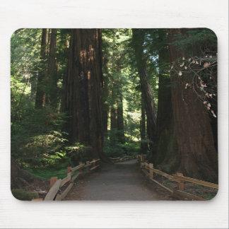 Monumento nacional de maderas de Muir Alfombrillas De Ratones