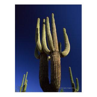 Monumento nacional del cactus del tubo de órgano postales