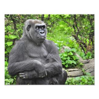 Monzón del gorila impresion fotografica