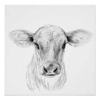 Moo A Young Jersey Cow Poster
