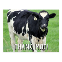 Moo Cow Thank You Postcard