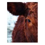 MOO de la vaca de Brown Tarjetas Postales