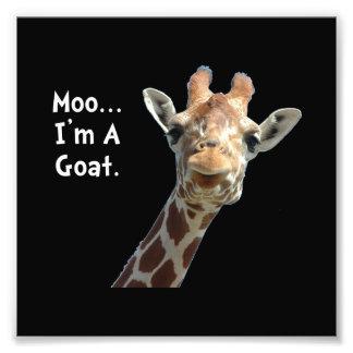 Moo Giraffe Goat Photo Print