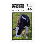 Moo Postage Stamp