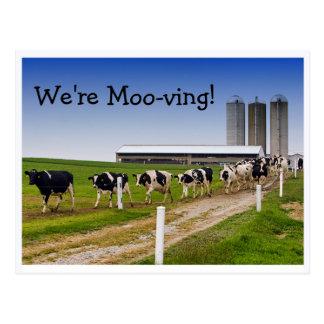 Moo-ving, Funny Cows Change of Address Postcard