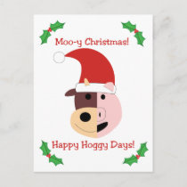 Moo-y Christmas and Happy Hoggy Days! Holiday Postcard