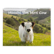 Moochi The Mini Cow Calendar