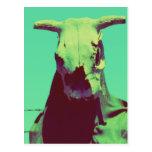 Moody Cow Skull Postcard