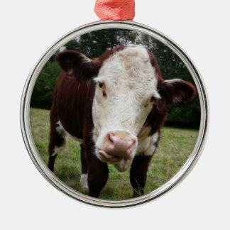 Moody Cow Sticks out Tongue Round Metal Christmas Ornament