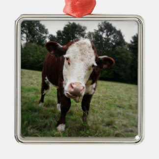 Moody Cow Sticks out Tongue Square Metal Christmas Ornament