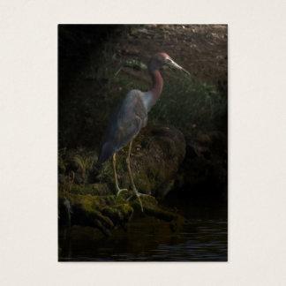 Moody Little Blue Heron ATC Photo Card