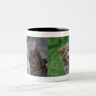 Moody Wildcats mug