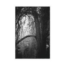 Moody Willow Tree Black and White Landscape Photo Canvas Print