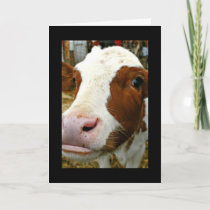 Mooey Christmas!  Card With Closeup Of Cow