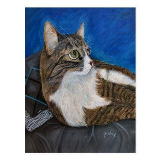 Moog la postal del gato
