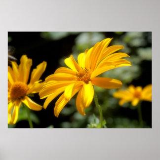 Mooie gele bloem poster