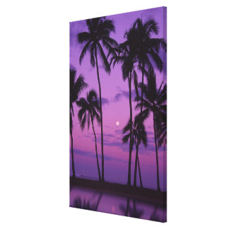 Moon and Palm Tree Stretched Canvas Prints